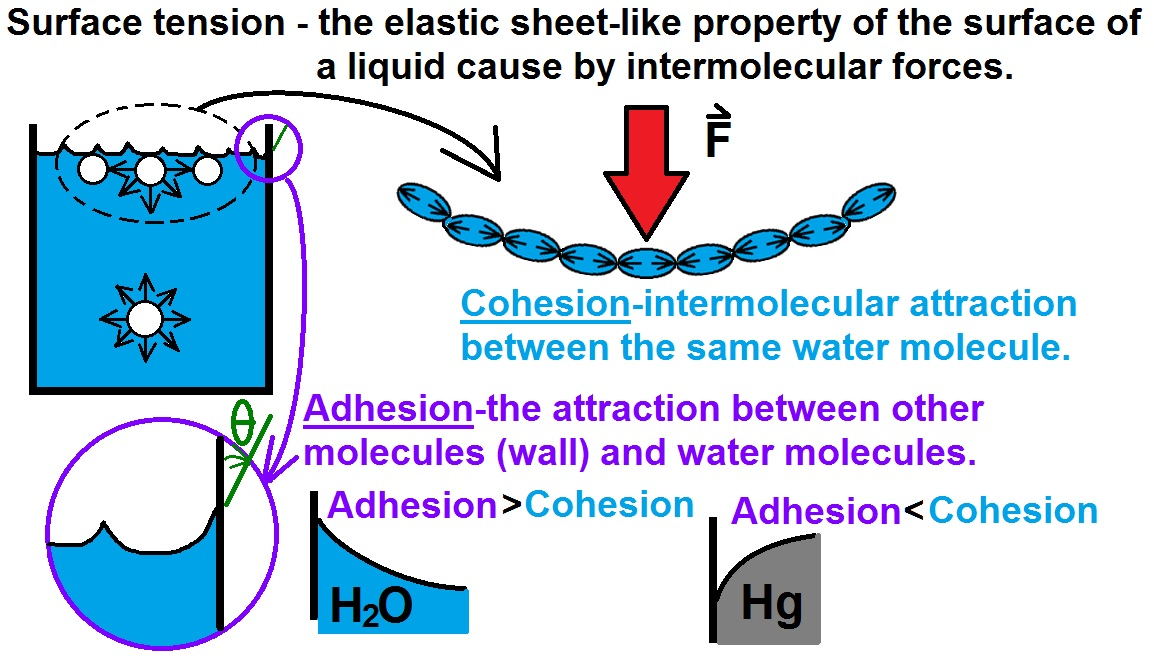 a research paper on the unique properties of water cohesion adhesion and surface tension 14 work of adhesion and cohesion if two phases (α and β) in contact are pulled apart inside a third phase ω, the original interface is destroyed and two new interfaces are formed (see figure as there will be a pressure difference δp across the surface it acts on the area xy and through a distance dz.